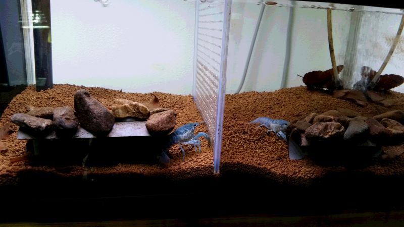 画像4:  『C-3 Mars』  8ℓ ザリガニやタイガー系のエビにオススメ